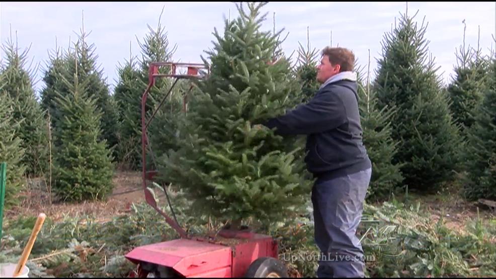 kingsley christmas tree farm sells hundreds this weekend - Christmas Tree Farm Colorado