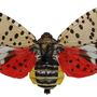 Spotted Lanternfly quarantine expanded to 13 counties, spotted in Schuylkill County