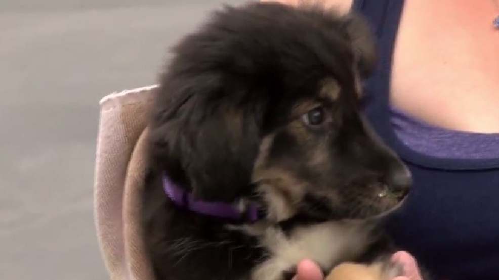 puppy bought on craigslist becomes medical nightmare for distraught