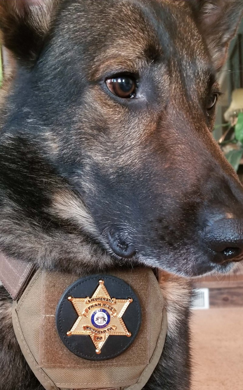 "Competing in ""America's Top Dog,"" Eddy wore this retirement  badge belonging to the late Lt. Fran Rice, a long-time Whitfield County lawman who passed away shortly after the show was filmed this summer. Photo via Mitch Talley."