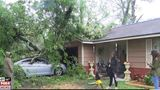 Storm causes tree to fall on Beaumont family's home and vehicles