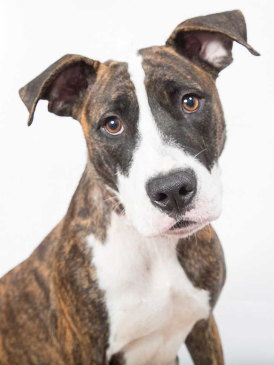 Free Pet Adoption Event Being Held Saturday In Rochester Wham