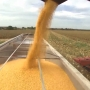 Illinois Farmers Could Take A Hit If Mexico Ends Corn Trading With U.S.