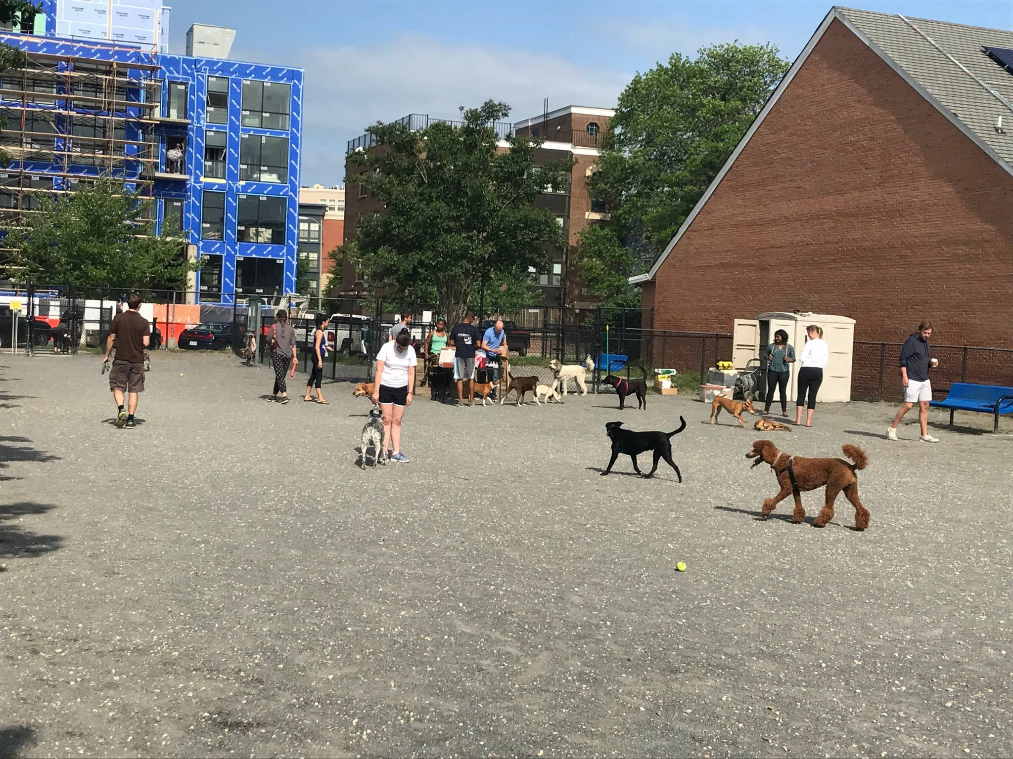 Head to one of these dog parks in the DMV to soak up that first bit of sunshine and let your dog run free with their four-legged friends. (Image: Courtesy Shaw Dog Park)