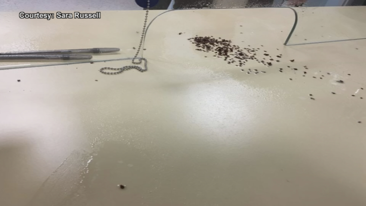 An Augusta man now faces charges after he allegedly threw bed bugs on a clerk's counter at city hall. (Sara Russell)