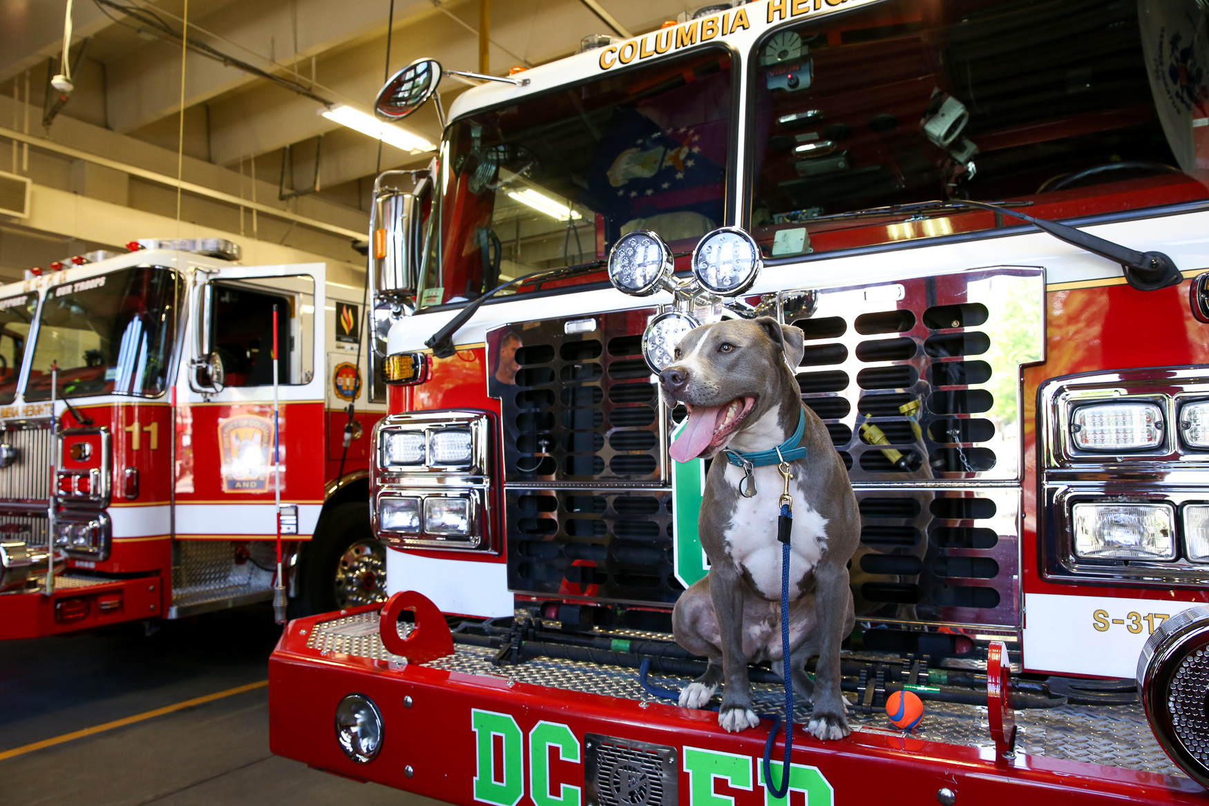 May 19-25 marks National EMS Week and firefighters and EMS workers are getting the chance to blow off a little steam and relax with some local dogs. D.C.-based organization PAL (People Animals Love) is bringing dogs to fire houses around The District this week. PAL also brings local dogs to hospitals, classrooms, prisons and other places where the pups can bring some comfort. (Amanda Andrade-Rhoades/DC Refined)