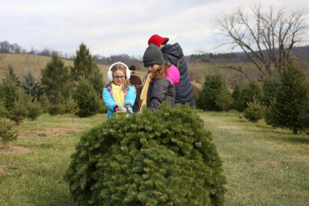Cut down your own Christmas tree{&amp;nbsp;} (Amanda Andrade-Rhoades/DC Refined){&amp;nbsp;}<p></p>