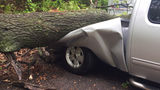 Fallen tree damages vehicles at Stadium Motors car sales lot