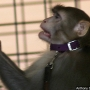 Feds warn U of U after lab monkey's death