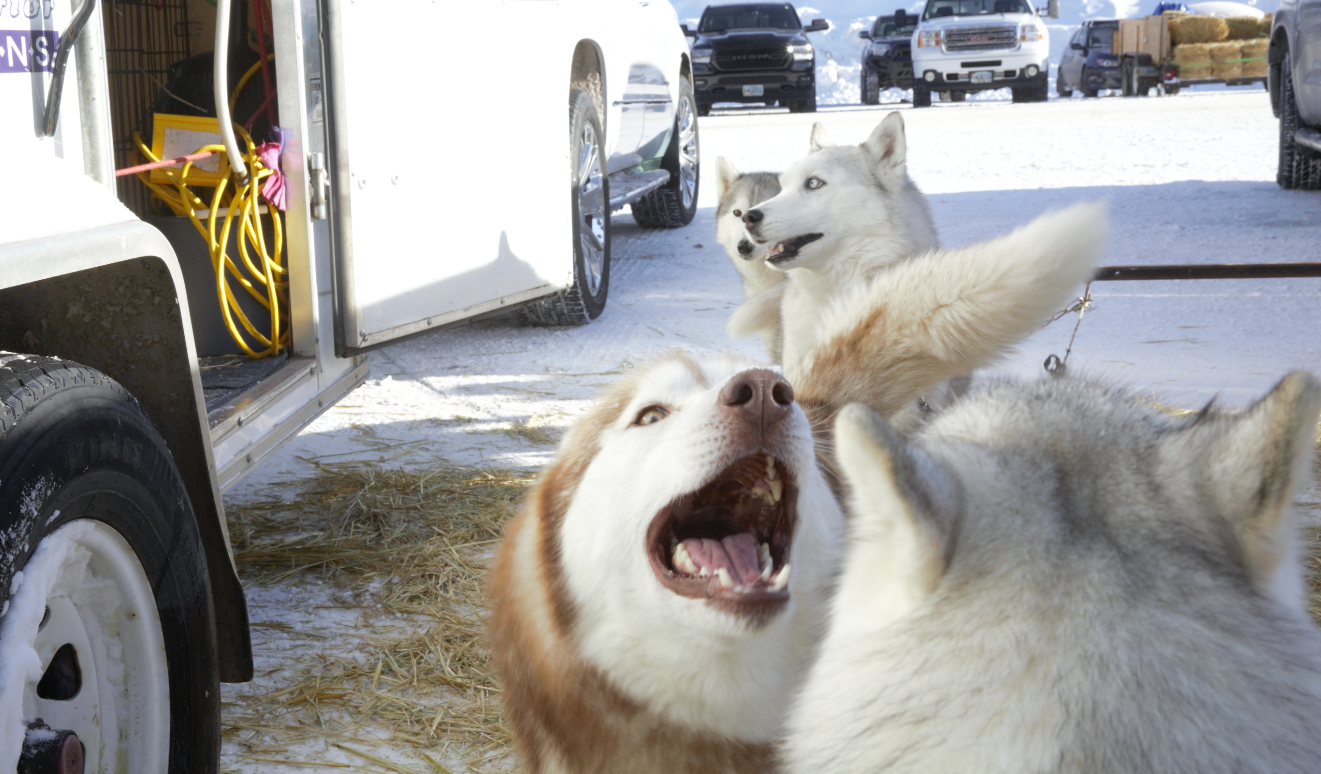 Earlier this month we had the pleasure of visiting Casper, WY on a press trip - and one of the most pawesome parts of said trip was experiencing the annual Casper Dog Sled Race! Nothing like a crisp winter day up on Casper Mountain where you can hang out with a BUNCH of gorgeous huskies. If I'm being honest, I had no idea what to expect from this experience but what I left with was SO. MANY. HUSKY. SNUGGLES. Before the dogs hit the snowy trail, you get to hang out with them! So that's what I did - and of course, managed to snap a few photos here and there. Oh and the race was pretty cool to watch too, but you know me - I JUST WANT ALL THE SNUGGLES. The Casper Dog Sled Races take place on Casper Mountain every January (Image: Gena Wynkoop / Seattle Refined).
