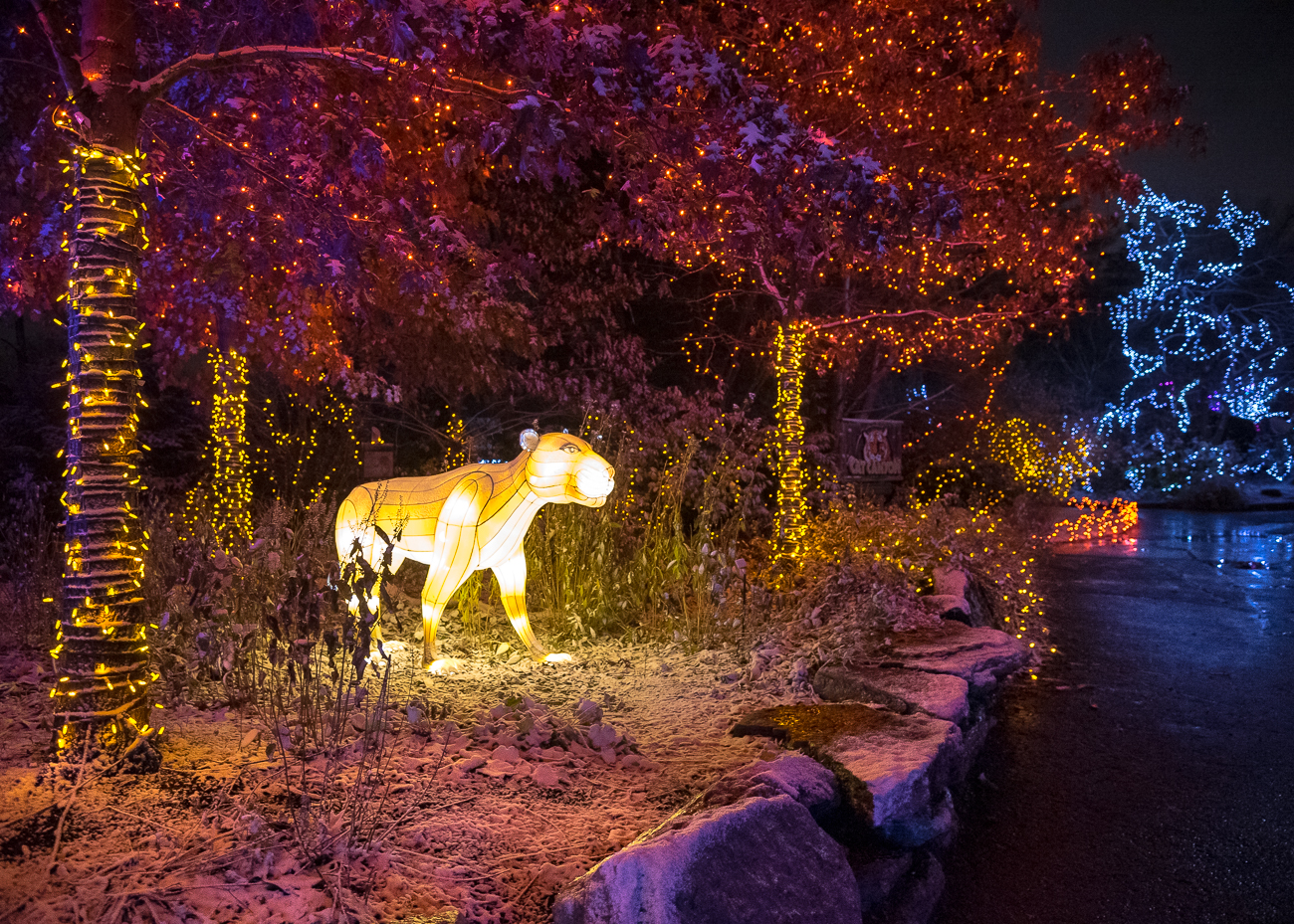 The 36th annual PNC Festival of Lights opened November 17 and runs through January 1. The zoo is alight with three million LED bulbs and a handful of animal lanterns sprinkled throughout the park. Going on a rainy or snowy night means far less crowds than usual, as well as gorgeous reflected light off the wet ground. / Image: Phil Armstrong, Cincinnati Refined // Published: 12.3.18