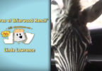 "Pal's 15 Seconds of Joy ""Zebras at Briarwood Ranch"""