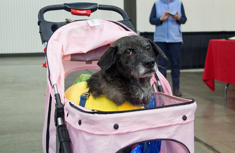 Animal lovers filled the Portland Expo Center this weekend for the annual Portland Pet Expo, a free event filled with dozens of vendors, educational booths, dog training classes and other pet-friendly activities. The expo also serves as an adoption event with more than 300 pets ready to find a new home. (KATU photo)