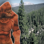 Bigfoot sculpture erected where some search for creature