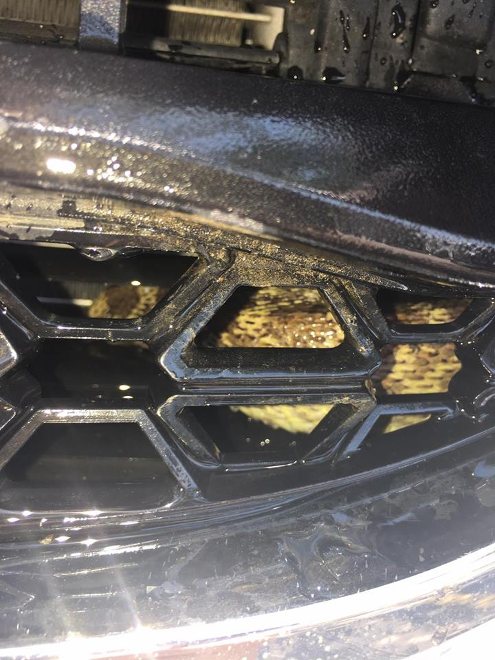 An employee at a local McDonald's was relieved when a Bull snake was removed from her engine. (Photo: WWWRC)