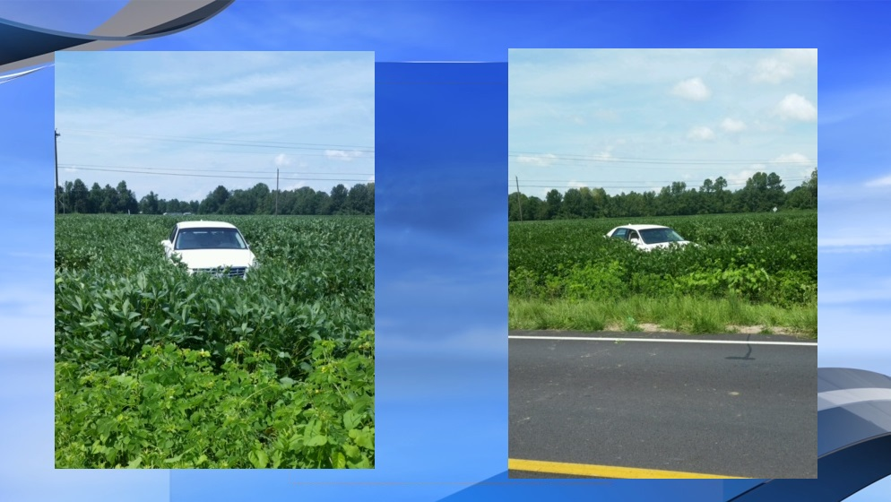 A car wrecked in a soybean field on Millers Church Road near Mullins following a police chase. (Viewer submitted photos. WPDE background)
