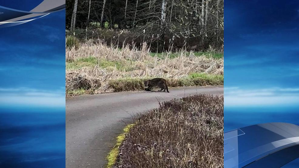 Oregon garden in silverton closes after cougar sighting kmtr for Oregon fish and wildlife jobs