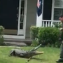 WATCH: 3 animal control officers wrangle alligator from SC porch