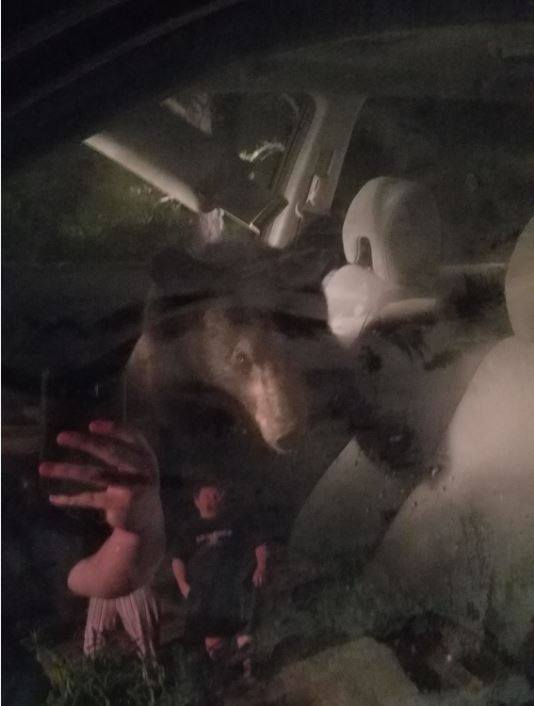 A bear cub locked himself inside a vehicle after finding some treats inside then honked the horn and woke up the homeowners (Photo: Roanoke County Police Dept.)