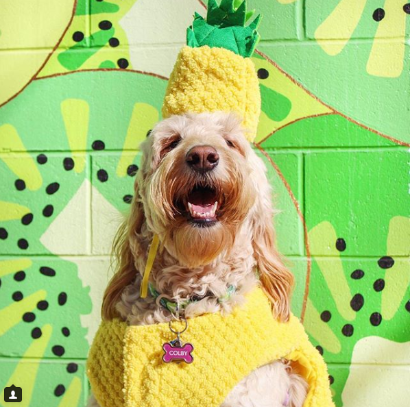 Tropic like it's hot!{ }(Image: via IG user @colbycheesedoodle)