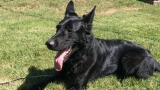 Coventry police tell story of new K-9 officer via Facebook
