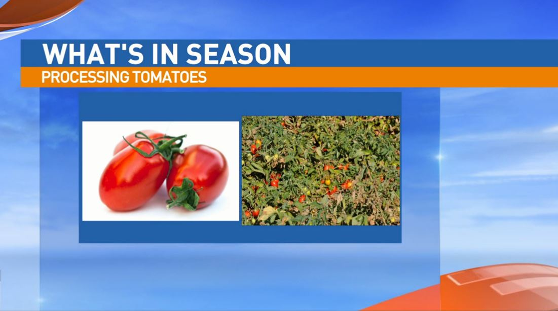 Ryan Jacobsen with the Fresno County Farm Bureau visited Great Day to talk about What's In Season: Tomatoes.