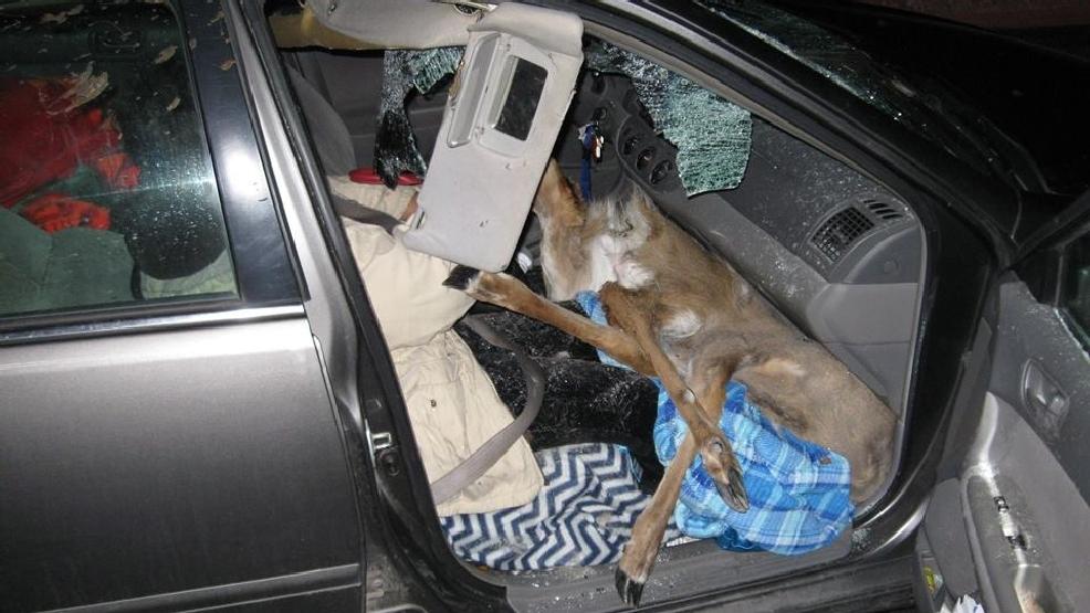 LaGrange Co. Cops: Deer Hit By Car, Lands On Passenger's