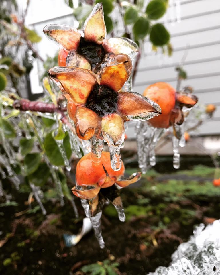 Ice photo from Heather Knight Tobar