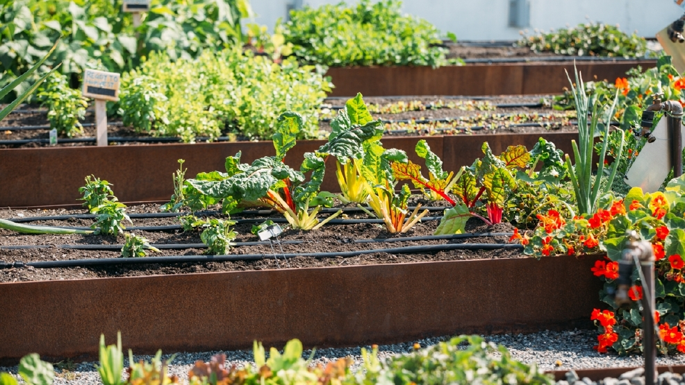 Urban Farming: Apartment Complex Edition | Seattle Refined