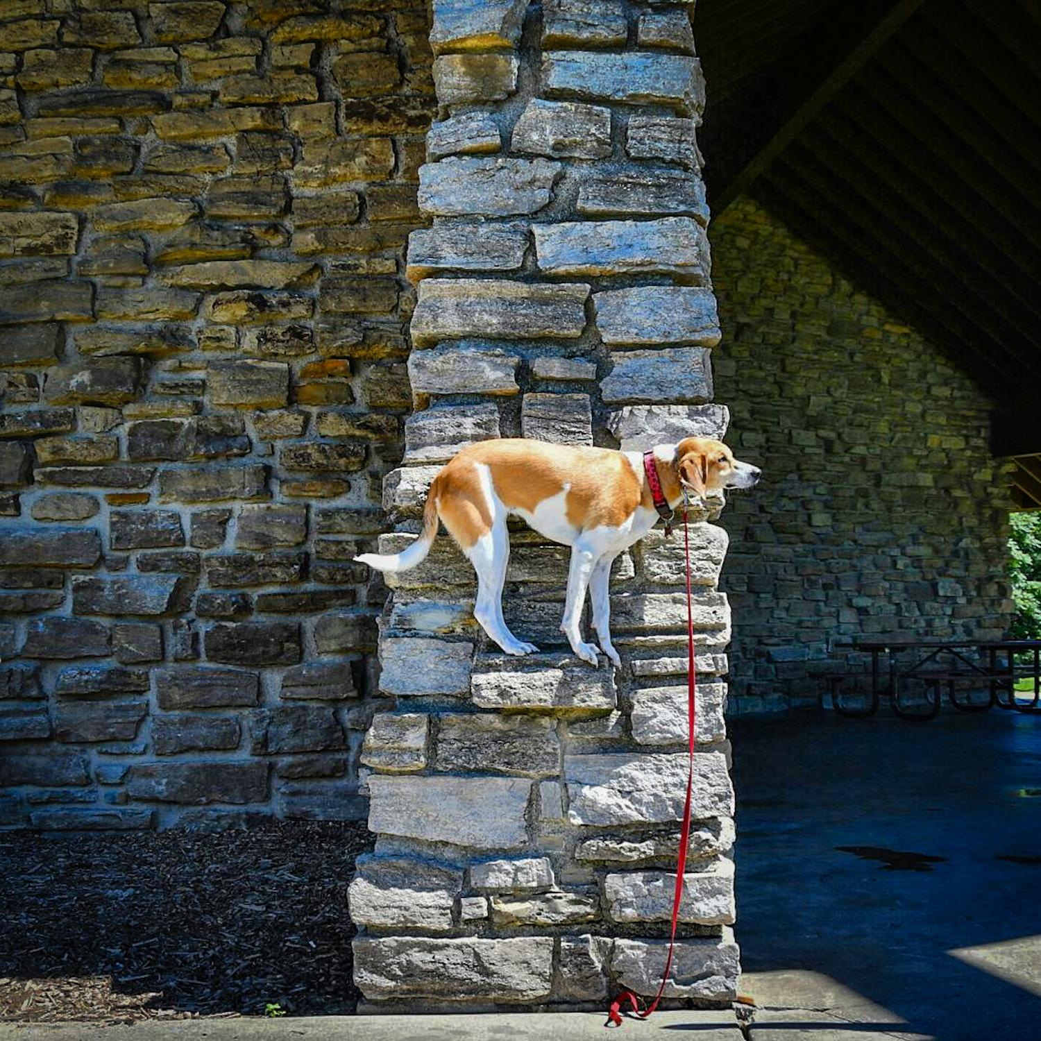 LOCATION: Daniel Drake Shelter / Mollie is a local Instagram celebrity. Famous for posing on fire hydrants in front of ArtWorks murals (and other Cincy landmarks), this hound dog has officially stolen our hearts. You can follow her adventures on Instagram @molliethehounddoggie / Image: Patti Mossey (Mollie's owner and #1 fan) // Published: 5.1.18