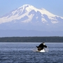Gov. Inslee to sign executive order on orca protections