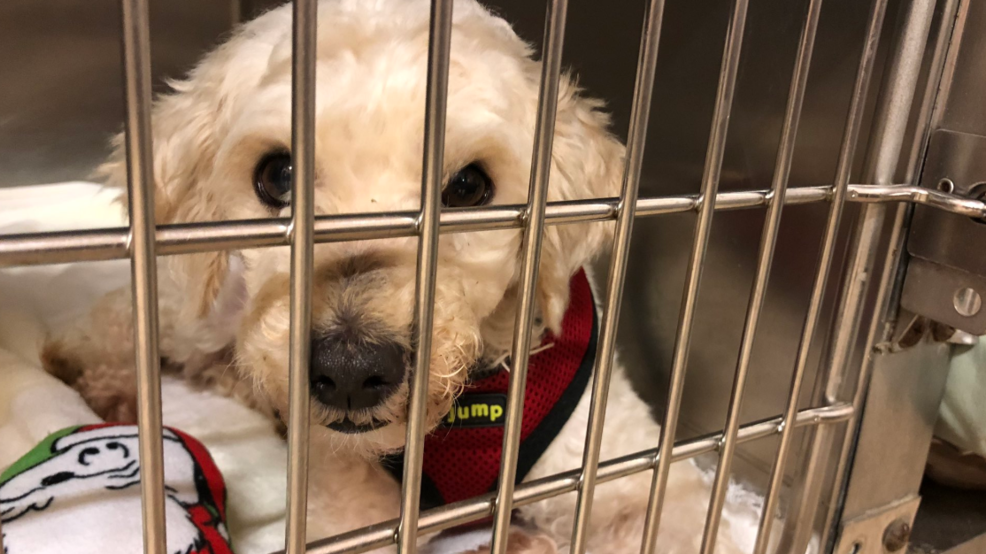 Local shelters look to help dogs saved from Chinese meat