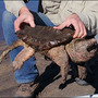 PETA, school district react to Idaho teacher feeding 'live puppy' to snapping turtle
